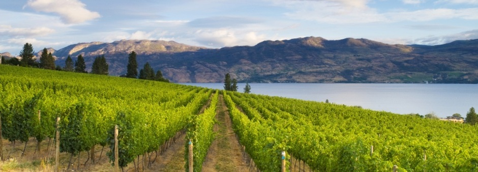 Washington State Wine Law