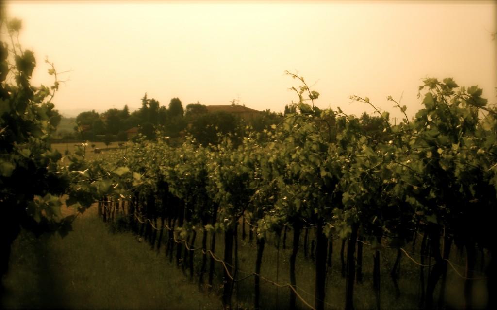 IMG 6724 1024x638 TTB Proposes New Regulations on Wine