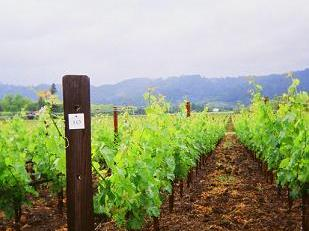 opusone vineyard Review of the UC Davis Wine Law Conference, June 2 4