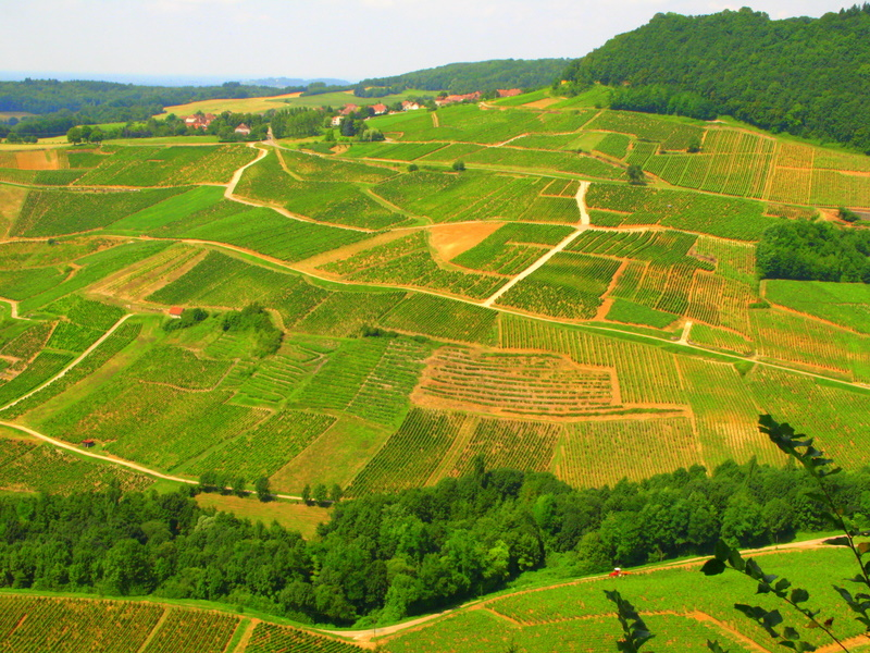 thejuraregion A Case for Vin Jaune: The Golden Wine of Seemingly Immortal Character