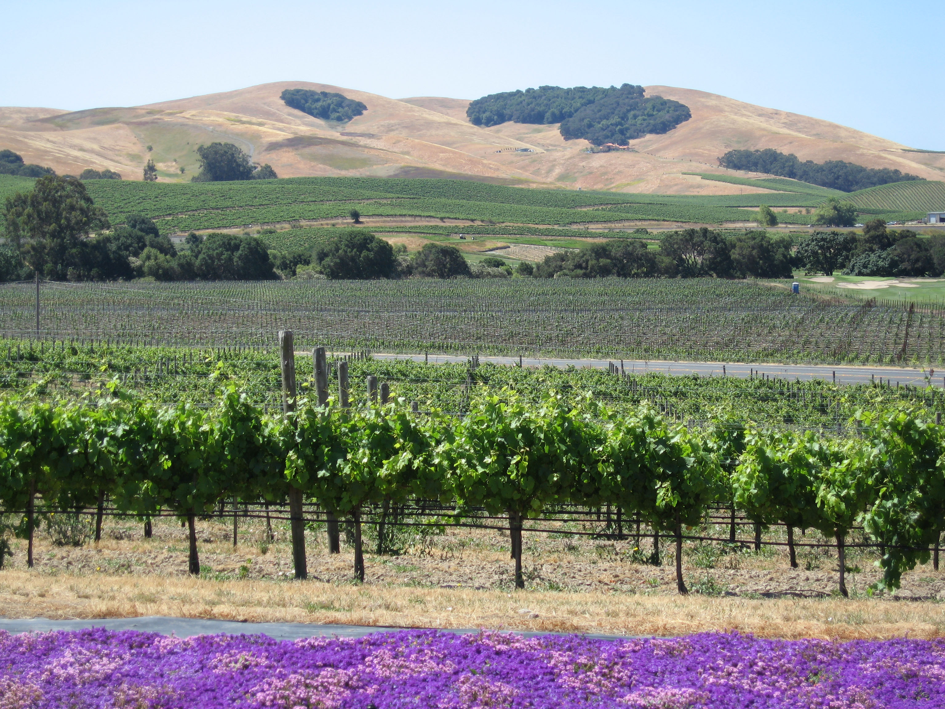 Upcoming Winery and Vineyard Law Seminars and Academic Opportunities