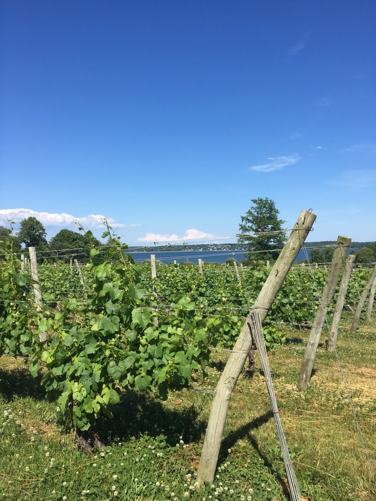 Greenvale Vineyards Sakonnet River