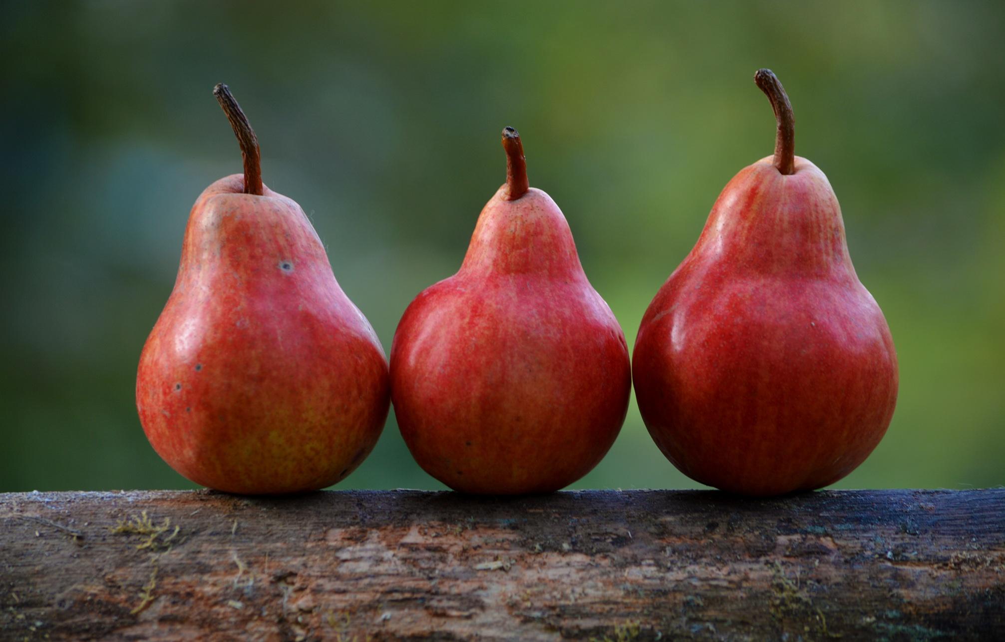 TTB federal definition cider pear apple